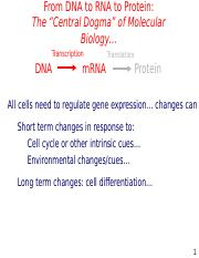 L14_Gene-regulation (2).ppt
