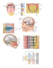 Gustatory and Olfaction Pics.pdf