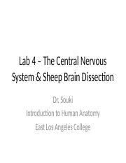 Lab 4 INM.CNS&SheepBrainDissection