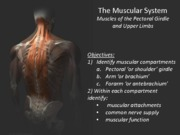 Lecture+6c+HS2330aKIN2222a+Muscles+of+the+upper+limb