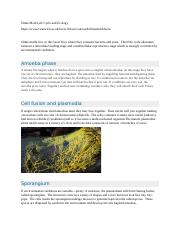 Slime Mold Life Cycle and Ecology.docx