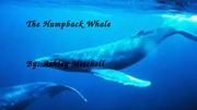 The Humpback Whale- final