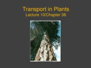 10-PlantTransportS109b