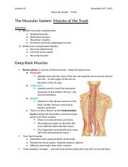 Lecture 15 Muscular System Trunk