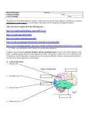 Brain Webquest.doc