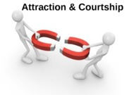 Lecture 4 Psych Notes (Attraction and Courtship)