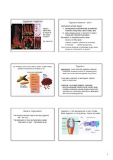 Digestive systems (ch 41)