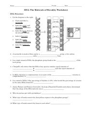 Dna the Molecule Of Heredity Worksheet Answers