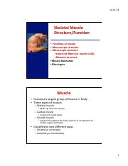 Lecture 3- Muscle Structure