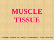 8_Muscle_Tissue_Spring_2013 (1)