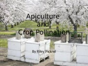 Apiculture and Pollination.pptx