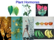 plant_hormones_revised