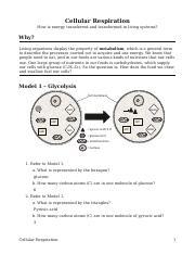Cellular Respiration pogil sheet.docx - Cellular Respiration ...