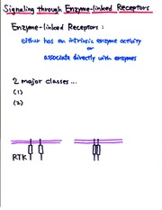 Cell Bio -Cell Communication, Enzyme Linked Receptors and Kinase Pathways