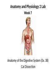 """sci 241 week 7 human digestion A healthy digestive system is essential to your dog's well-being understanding   human and canine digestive systems share other similarities """"dogs have a."""