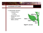 ghex.colostate.edu_presentations_How_Plants_Grow.9