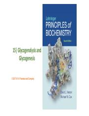 Glycogenesis and Glycogenolysis 2017.pdf