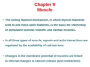 Muscle Powerpoint - 9:15.ppt