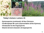 Plant Diversity Lecture 6-Gymnosperms (continued) - tour of Divisions - 110714