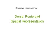 Visual Systems- Dorsal Route