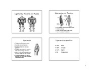 Musculoskeletal System IV - LECTURE SLIDES
