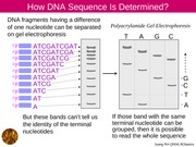 NA08 DNA sequencing