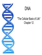 DNA+and+Protein+Synthesis.pdf