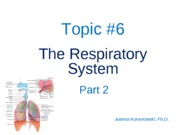 ANP 1105 The respiratory systemJK Part 2