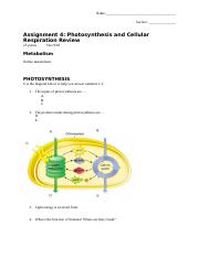 Photosynthesis and cell resp review (1).docx