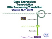 Gene expression lecture 16, 17 and 18
