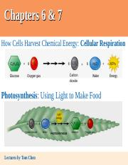 Ch6,7 & Lab 5e Cellular Respiration & Photosynthesis.ppt