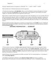 Respiration review.doc