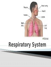 12a_Respiratory_SystemApril_4_2013_(1).pptx