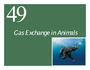 Ch49 Lecture-Gas Exchange in Animals