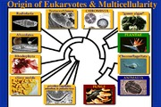 P10-Lecture 19-Eukaryotes & Protists- March 26