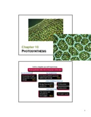 10 Photosynthesis slides.pdf