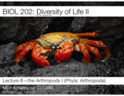 Lecture 8-The Arthropods I-2016-Slides.pdf