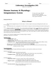 Name Class Date Laboratory Investigation 24A Chapter 24A_ Human Skin.pdf