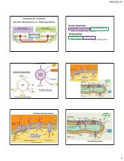Respiration Versus Photosynthesis.pdf
