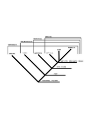 Full Cladogram