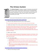 The Urinary System.docx