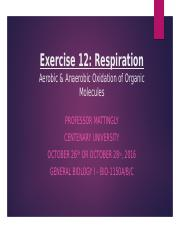 Lab 8 Exercise 12 Respiration