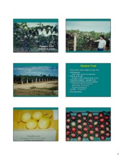 pom212_passion_fruit_2005_handout
