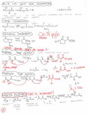 Ch 18 Synthesis notes
