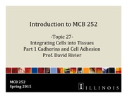 MCB 252 Topic 27 Integrating Cells into Tissues- Cell  Adhesion Sp15