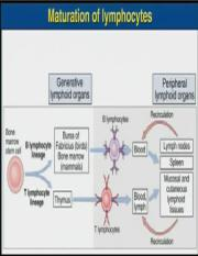 Lecture  Organ and cells of Immune system 2 .pptx