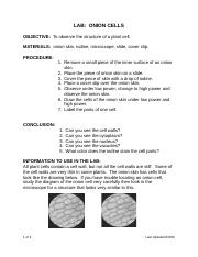 Onion Cell Lab and Conclusion.doc