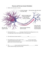 2Neurons_and_Nervous_System_Worksheet