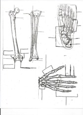 Bone diagrams page 2