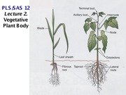 L02. Vegetative and Pre-reproductive Plant Body